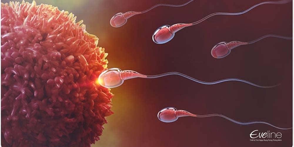 Tinh trùng khỏe mạnh giúp tăng khả năng mang thai
